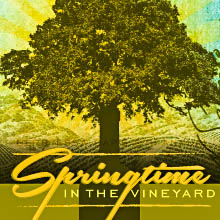 Springtime in the Vineyard